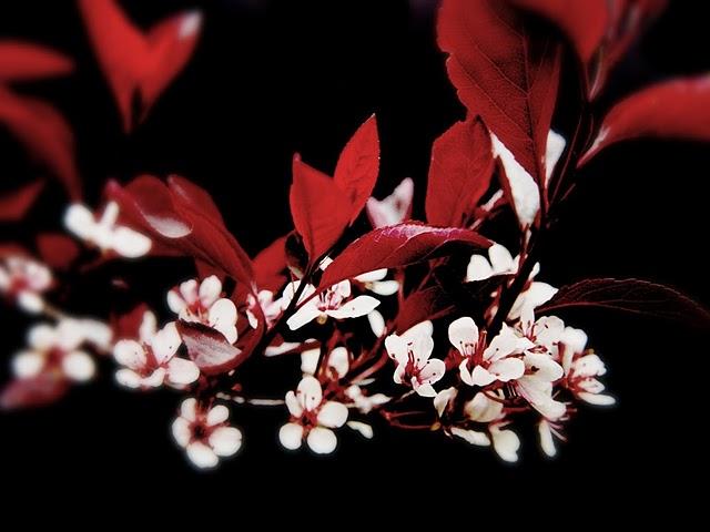 Frame Flowers Against Black for Drama Photo ByJames Jordan