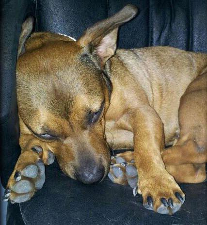 Wix Dog # 14: Bono