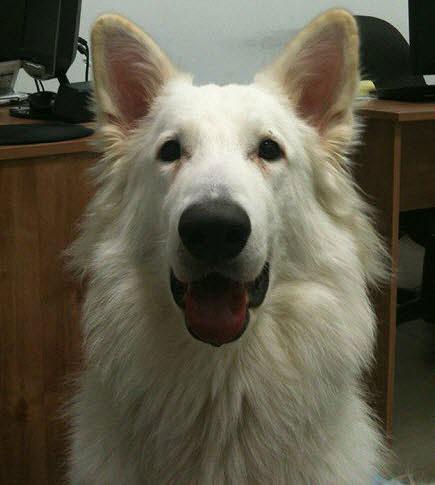 Wix Dog # 13: Steve-O