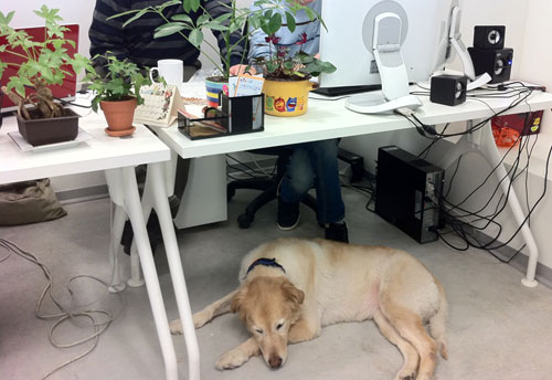 Wix Dog # 11: Tsemmer