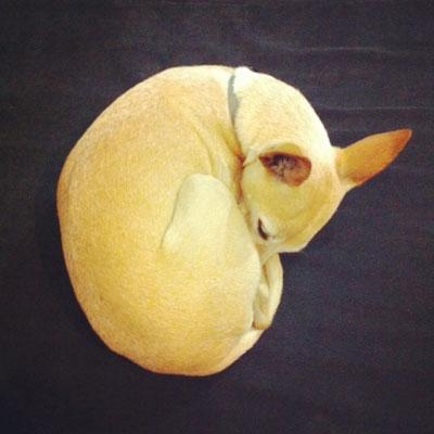 Wix Dog # 3: Suzi