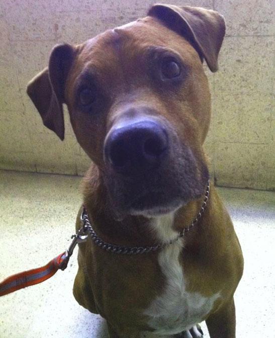 Wix Dog # 2: Toby