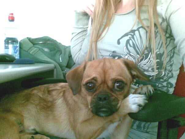 Wix Dog # 1 - Jacko