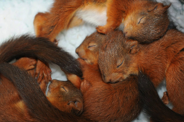 squirrel-kittens
