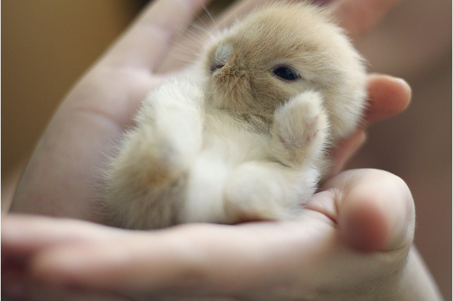 Baby bunny on a hand