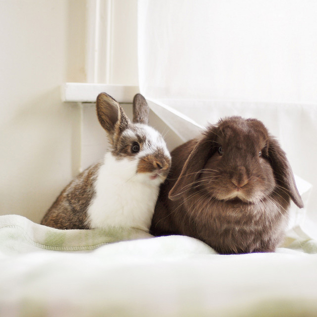 two bunnies on a bed