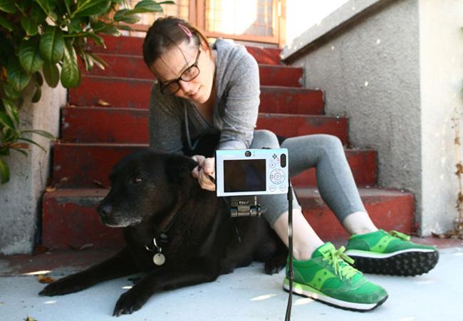Incredible Pet Photography DIY