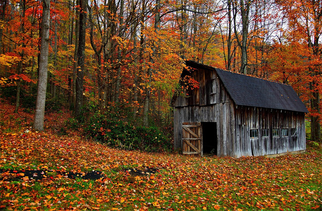 Amazing Foliage Photos to Get You in the Mood for Fall