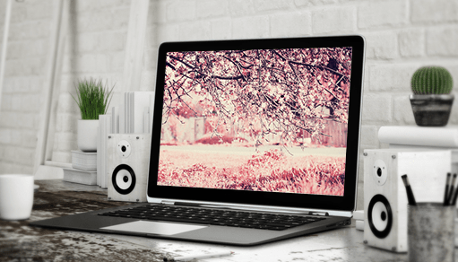 Hottest Wix Features To Try This Spring